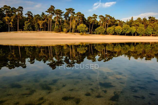 Березі озера з дерева роздуми — стокове фото