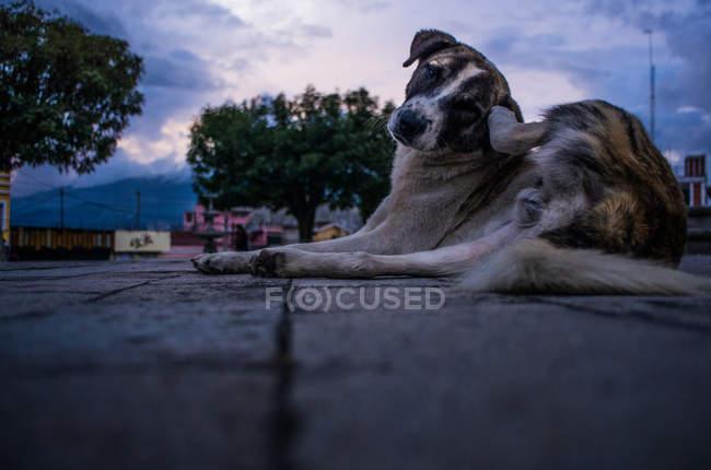 Carino cane senzatetto — Foto stock