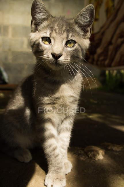 Kitten sitting on ground in garden — Stock Photo