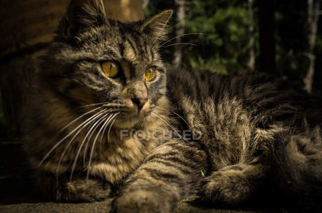 Adorable kitten sitting in garden — Stock Photo