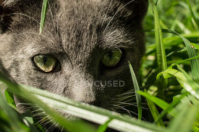 Funny kitten in garden grass — Stock Photo