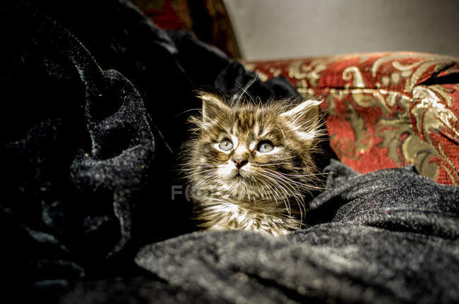 Tiny kitten in cloth — Stock Photo