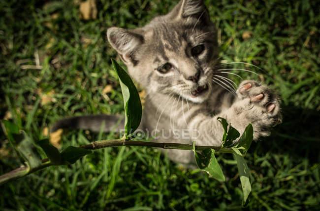 Grey kitten playing in grass — Stock Photo