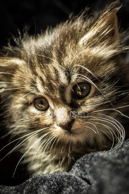 Piccolo gattino in tessuto — Foto stock
