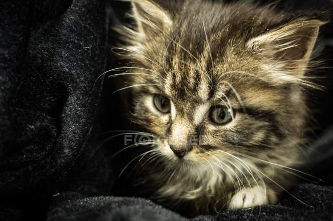 Small kitten in cloth — Stock Photo
