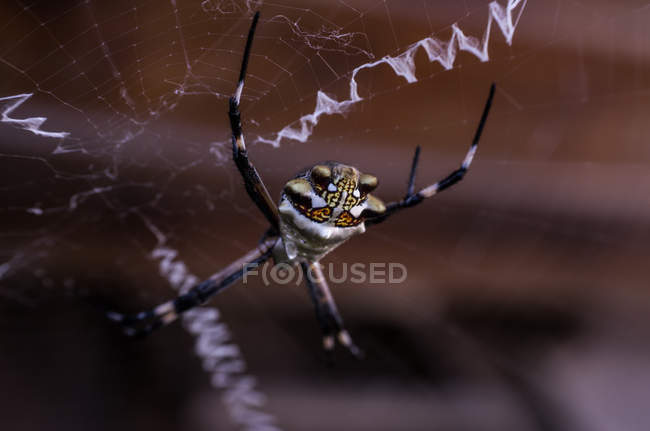 Wasp spider on web — Stock Photo