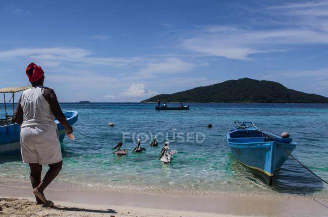 Женщина, стоя на пляже и кормление пеликанов — стоковое фото