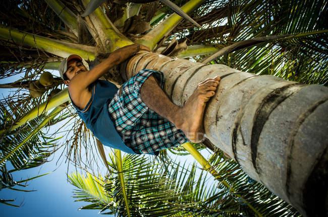 Árvore de escalada de homem — Fotografia de Stock