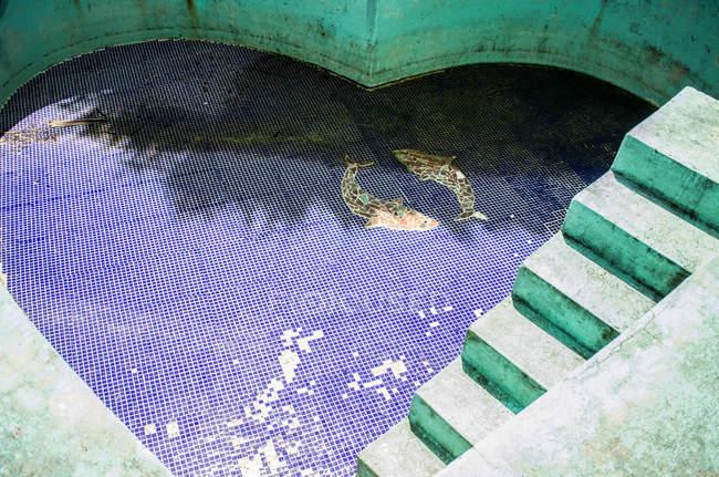 Empty Heart Shaped Pool U2014 Stock Photo