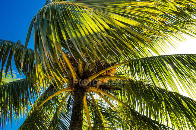 Palm tree in Livingston — Stock Photo