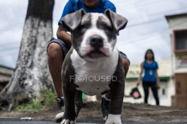 Pet dog sitting on asphalt — Stock Photo
