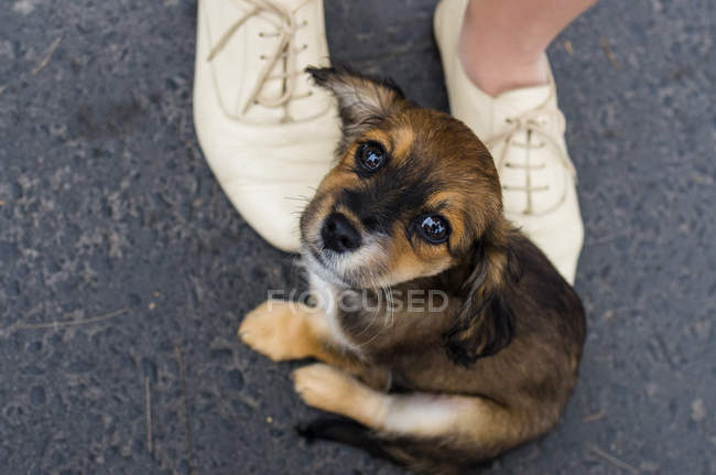Милий щеня собака — стокове фото