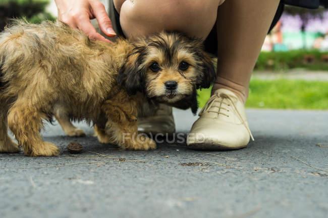Puppy at girls feet — Stock Photo
