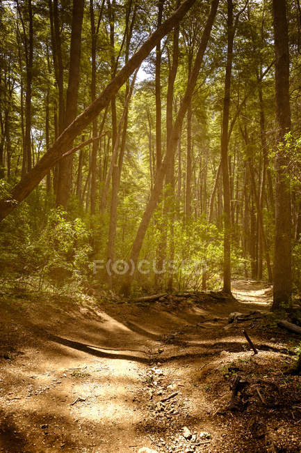 Sun shining on trail in forest — Stock Photo