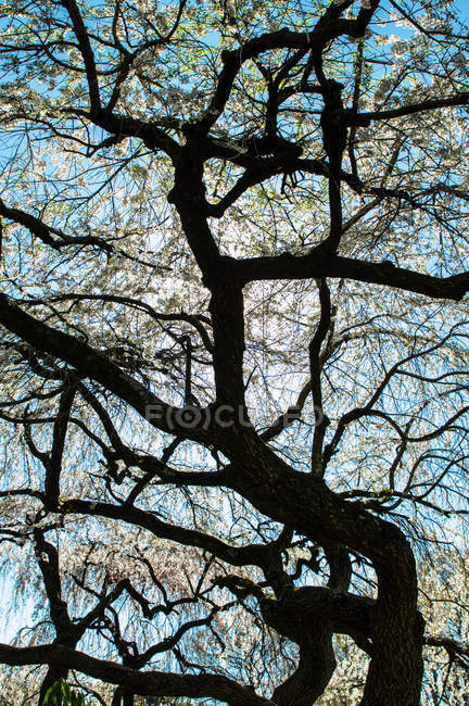 Tree branches silhouette — Stock Photo