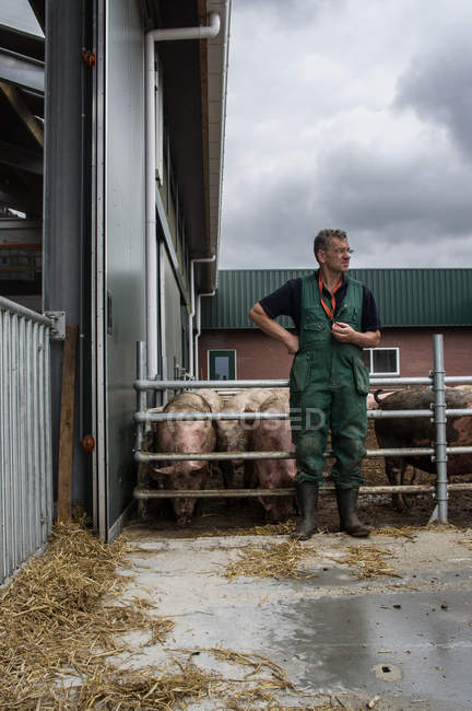 Male farmer at pig farm — Stock Photo