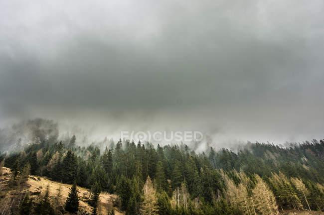 La niebla sobre la colina del bosque - foto de stock