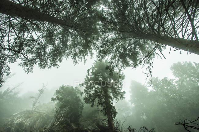Bosque de la montaña brumosa - foto de stock