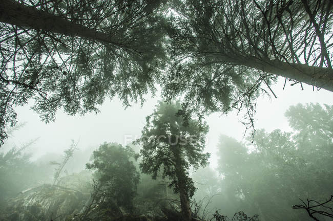 Floresta de montanha enevoada — Fotografia de Stock