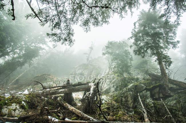 Troncos de árboles muertos en colina brumosa - foto de stock