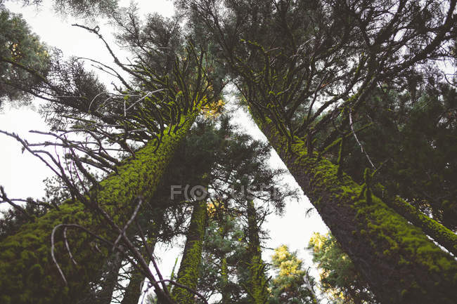 Wald in Crater Lake Nationalpark — Stockfoto