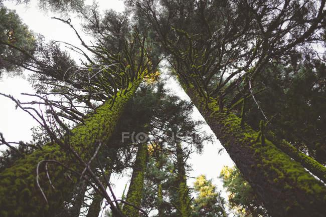 Forêt dans le Parc National de Crater Lake — Photo de stock