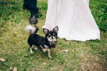 Невеста и жених с собакой в саду — стоковое фото