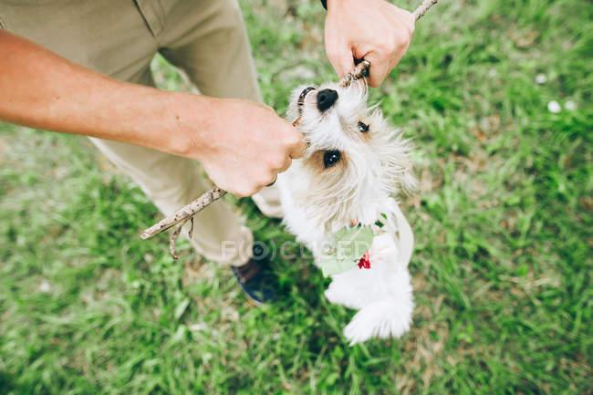 Brincando com o cão e o pau de homem — Fotografia de Stock