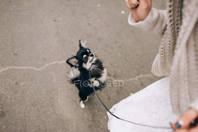Невеста играет с собакой — стоковое фото