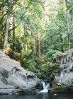 Waldquelle und See — Stockfoto