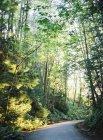 Дороги повернуть в густом лесу — стоковое фото