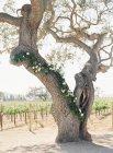 Дерево, украшенный цветами — стоковое фото