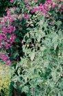 Flowers growing in garden — Stock Photo