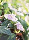 Fleurs qui poussent sur les plantes — Photo de stock