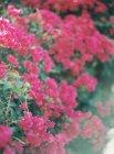 Fiori che crescono in giardino — Foto stock