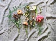 Fresco taglio fiori colorati — Foto stock