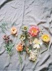 Свежесрезанные красочные цветы — стоковое фото