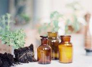 Декоративные бутылки и свежие собранные растения — стоковое фото