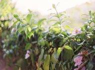 Flores que crescem em plantas — Fotografia de Stock