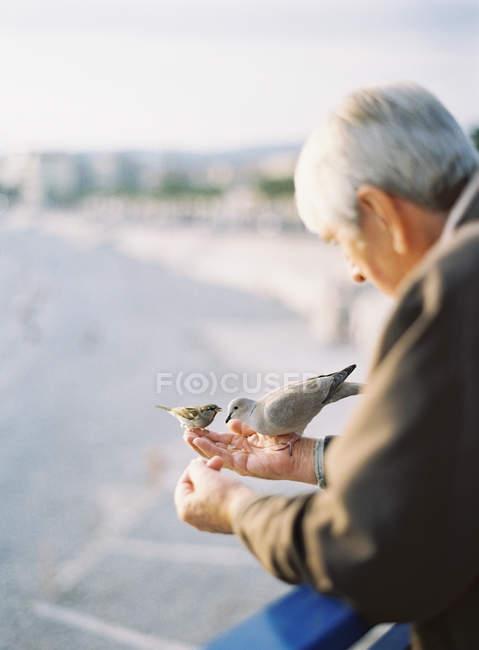 Hombre alimentando aves - foto de stock