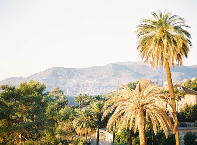 Palme e villa sulla cima della collina — Foto stock