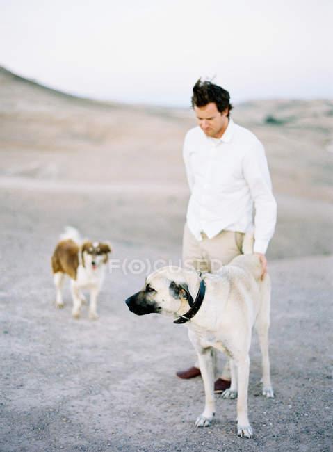 Человек и две собаки — стоковое фото