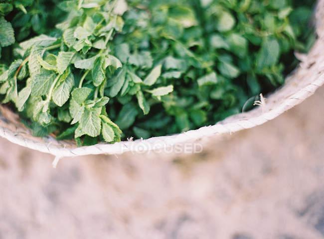 Hojas de menta en cesta - foto de stock