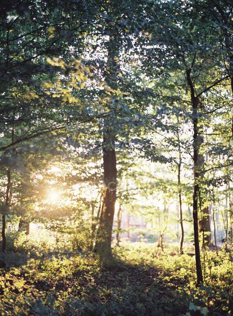 Luz do sol na floresta de verão — Fotografia de Stock