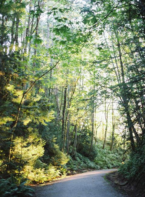 Strada girare nella fitta foresta — Foto stock