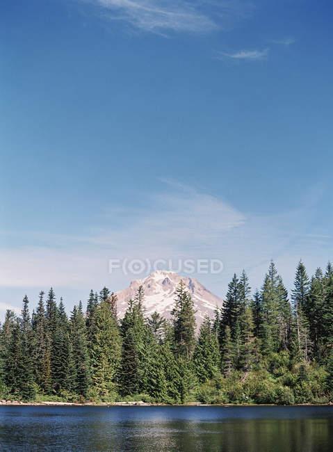 Riva del lago con alberi di pino — Foto stock