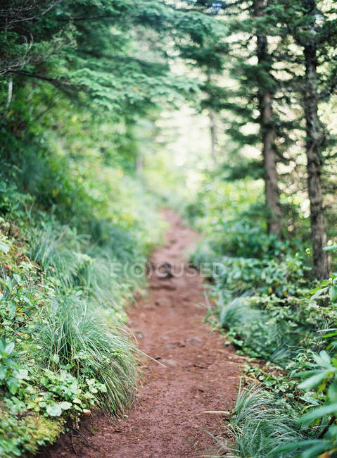 Small road in forest — Stock Photo