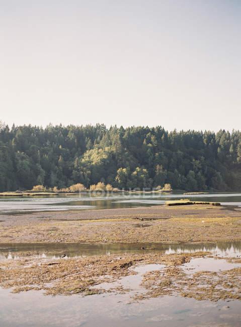 Lago cerca del bosque en el campo - foto de stock