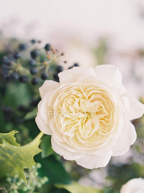 Frische Rose im Strauß — Stockfoto