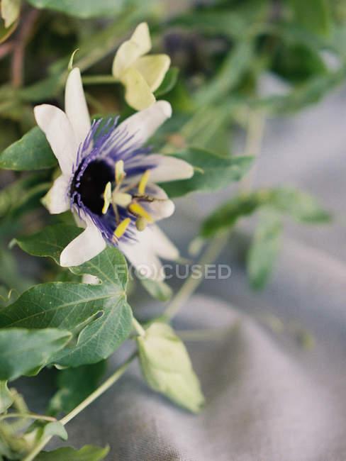 Fresh cut summer flower — Stock Photo